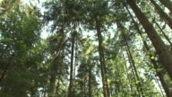 HD: Forest video