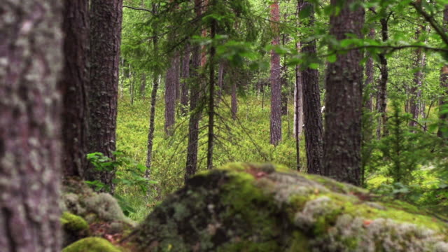 STEADY CAM: Forest video
