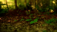Forest video