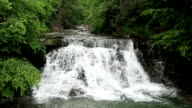 Forest waterfall (Full HD) video