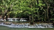 Forest waterfall video