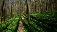 Forest with footpath video