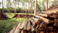 forest with stack of firewood video