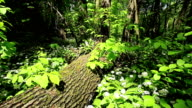 Forest with tree trunk video