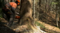 HD SLOW-MOTION: Forester at work video