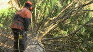 HD SLOW-MOTION: Forester video
