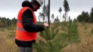 Forester walking and checking new growth pine video
