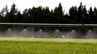 Forestry automatic irrigation equipment slow video