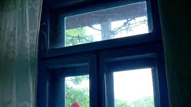 Forgotten Window with Spider Web video