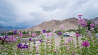 Formal Garden In Leh Village, Ladakh, India video