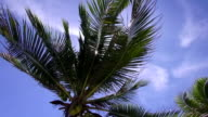 HD Format : Coconut tree on the beach in Koh Phangan, Suratthani, Thailand video