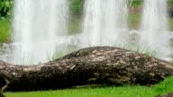 Fountain video