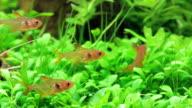 Four fish in aquarium video