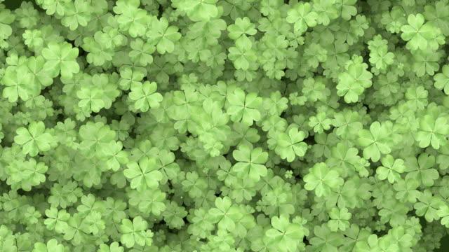 Four Leaf Clover Background video