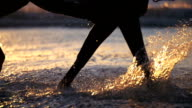Four legged freedom video