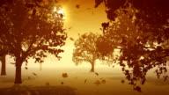 Four Seasons - Autumn video