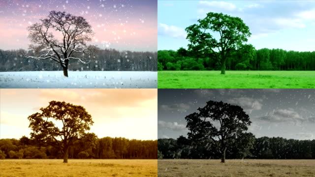 Four Seasons in one shot. HD video