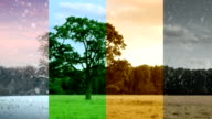 Four Seasons in one shot. HD video