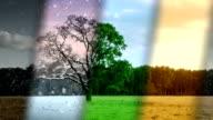 Four Seasons Weather - loop. HD video
