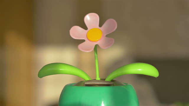 Four videos of dancing flower in 4K video