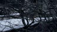 Fox in Ghost Town Pripyat at winter video