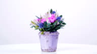 Fragility of divine floral beauty video
