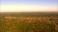 Francis Marion national forest - Aerial View - South Carolina,  Charleston County,  United States video