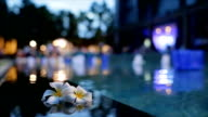 frangipani flower on the pool,concept for relax and spa at twilight time video