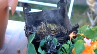 Frankincense burning on a hot coal. Frankincense is an aromatic resin, used for religious rites video