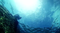 Free diver hunting fishes in the abyss video