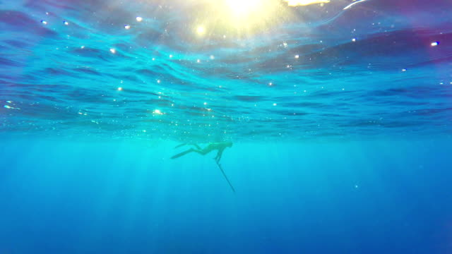 Free diver spearfishing in blue sea video