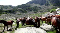 Free Mountain Horses in Summer Day - Stock Footage video