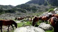 Free Wild Mountain Horses video