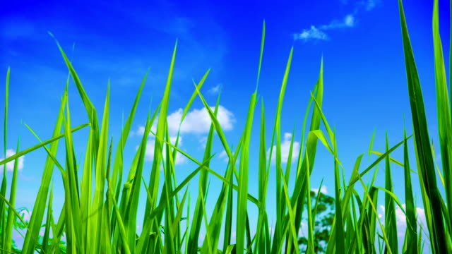 Freedom - grass and sky video