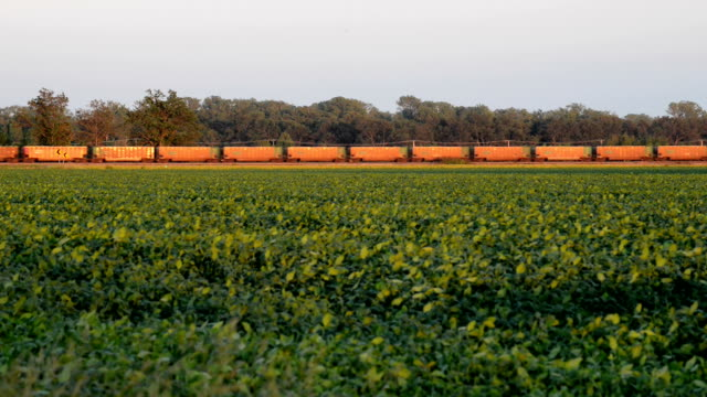 Freight Train and Soy Bean Fielde video