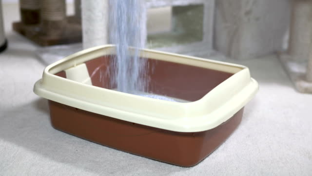 Fresh and clean cat litter box filling with unscented clumping litter video
