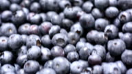 Fresh blueberries video