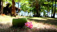 Fresh coconut with drinking straw on  beach video