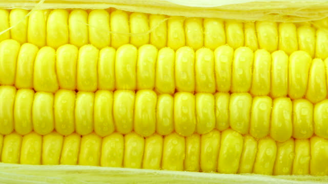 Fresh corn. close up.Front view. From right to left. video