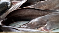 fresh fish catfish in stores video