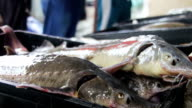 Fresh Fish in Ice on the Counter Market video