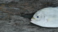 Fresh fish on wooden background. video
