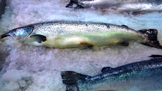 Fresh frozen fish salmon lying on the white ice in supermarket refrigerator video