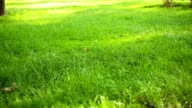 fresh green grass in the summer park video