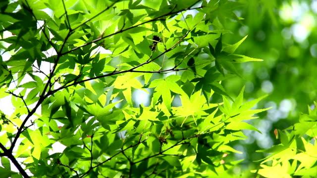 fresh green leaves video