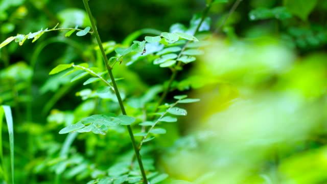 Fresh Green Plants after Rain, dolly shot video