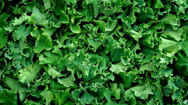 Fresh Kale Vegetable Rotating video