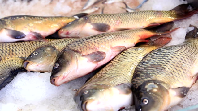 Fresh live fish laying on ice at the fish market. video