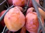 Fresh Market Persimmons video