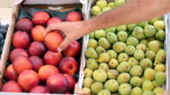Fresh Nectarines For Sale video